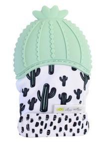Cactus Itzy Mitzy