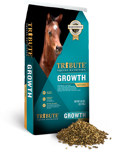 TRIBUTE GROWTH 16%