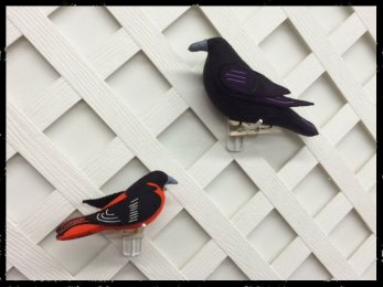 The Oriole And The Raven
