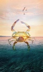 call of the wild crab-seaside