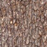 Landscape Medley Tree Bark Brown