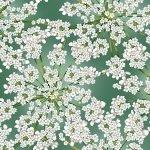 Holiday - Winter Blooms Eucalyptus