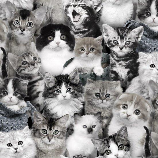 Elizabeth's Studio- Cat Breeds 3809-Gray
