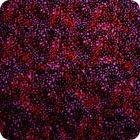 MS Textiles- Australian- Utopia bush Plum-Red