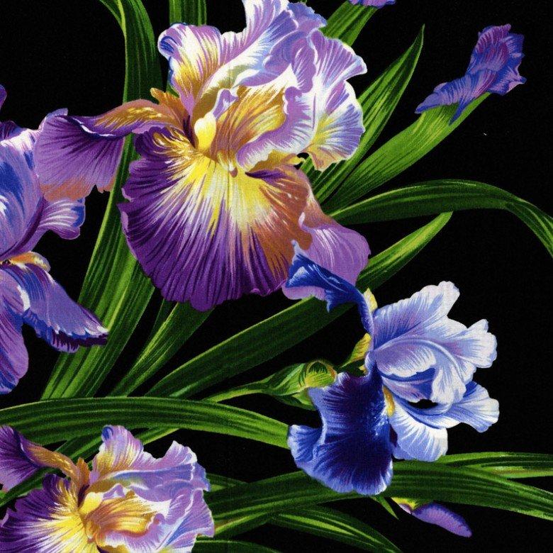 dc4127_black_3 Purple Iris on Black Michael Miller