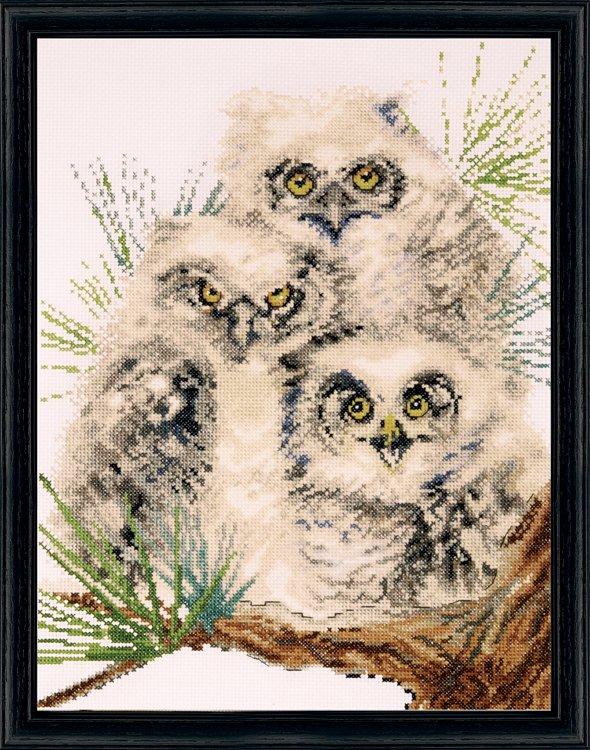 # 2781 Owl Trio