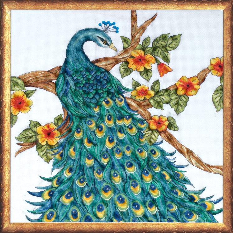 # 2808 Peacock