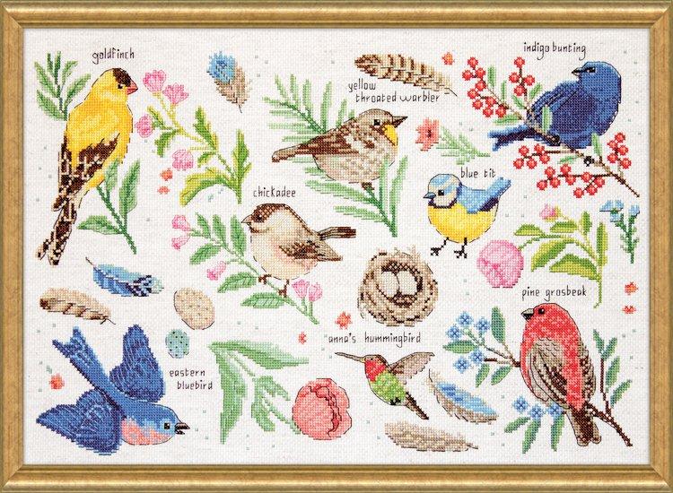 # 3413 Bird Study
