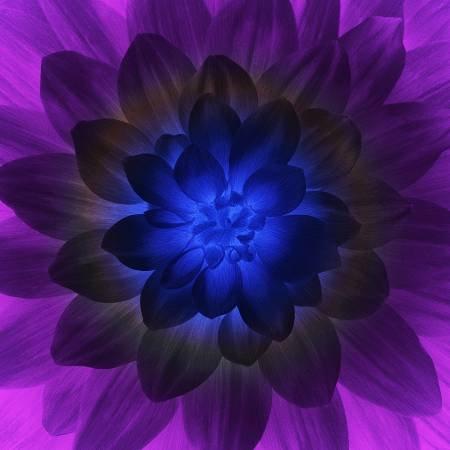 Blacklight Dream Big Flower Hoffman Digital Panel 44 x 44