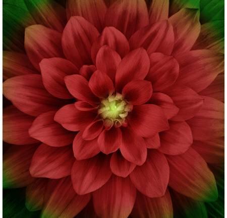 Scarlet Dream Big Flower Hoffman Digital Panel 44 x 44