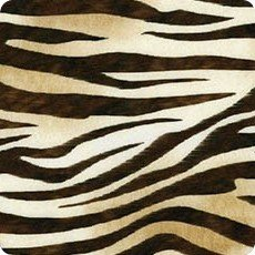 Wild zebra Picture This digital prints AYK-17267-286