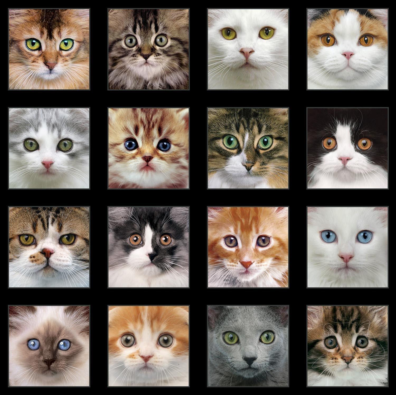 Adorable Pets 3810 Multiple (Cat Faces) Panel