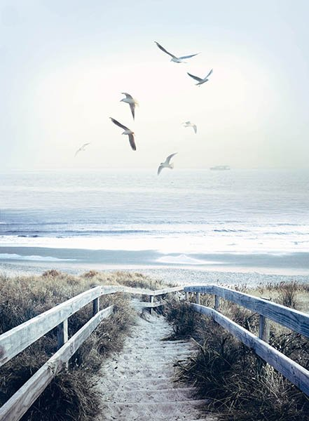 Call of the Wild Beach Steps R4620-312