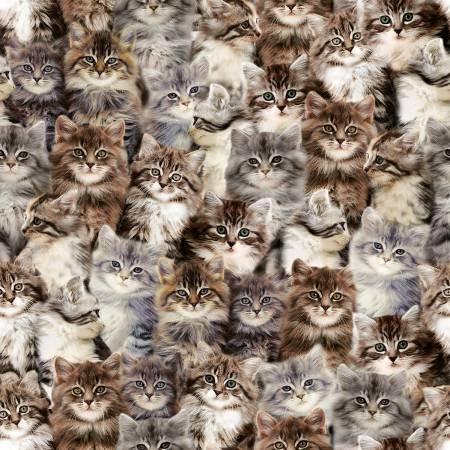 Windham Fabrics - One of a Kind - Multi Kittens - Digitally Printed