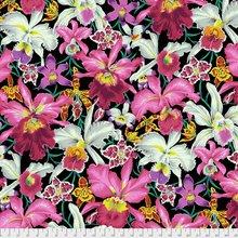 Philip Jacobs Orchids Black