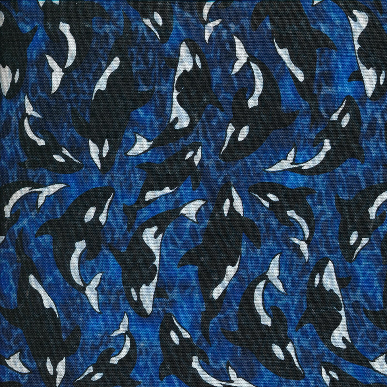 Orcas on Royal Blue