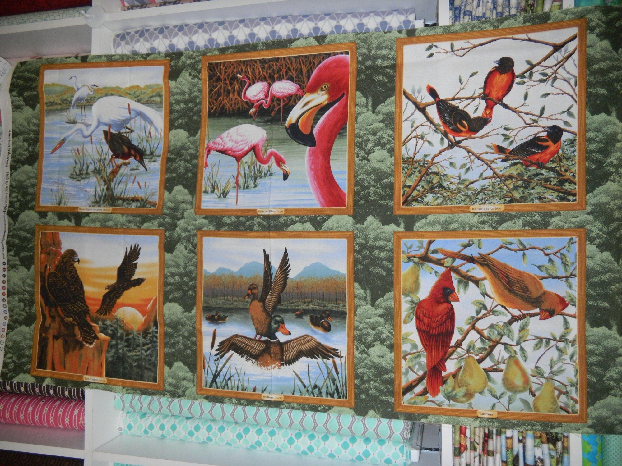 Panel#167 - American Wilderness - Birds