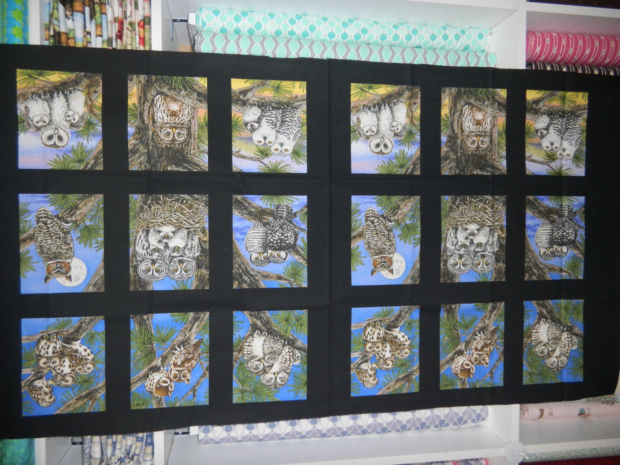 Panel#170 - Owls - Birds