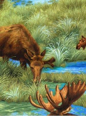 Moose Lake - moose in lakes