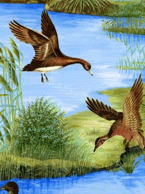 Moose Lake - ducks on a pond