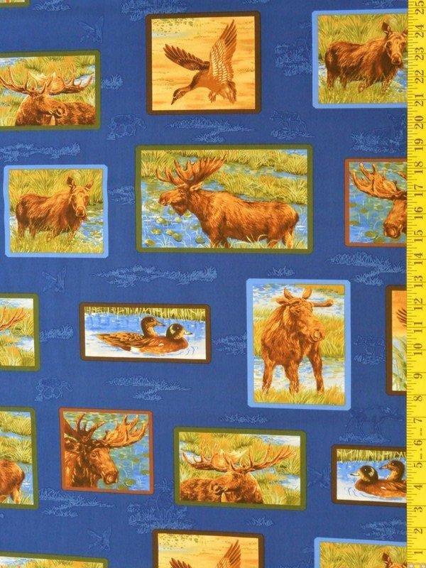 Moose Lake - moose in frames