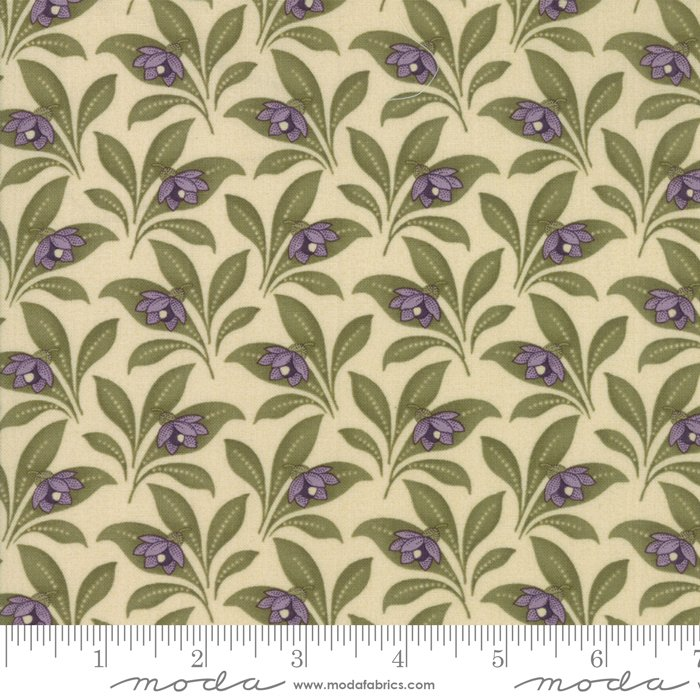 Sweet Violet - blossom in leaves on ivory