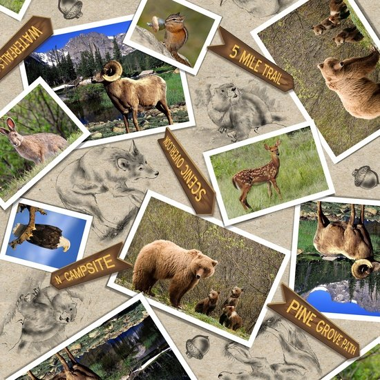 Our National Parks - animal photos on natural background