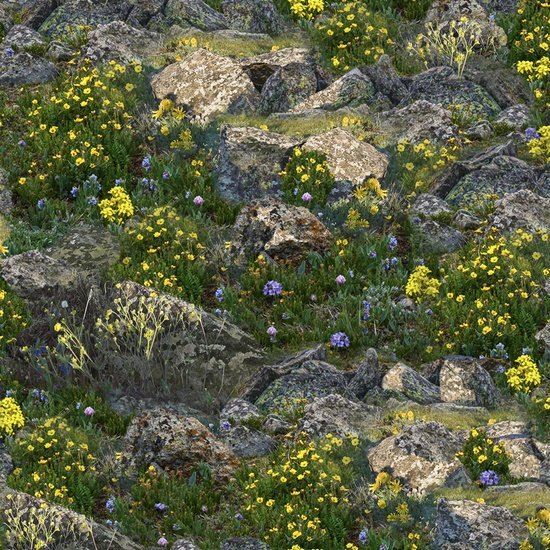 Our National Parks - rocks and flowers