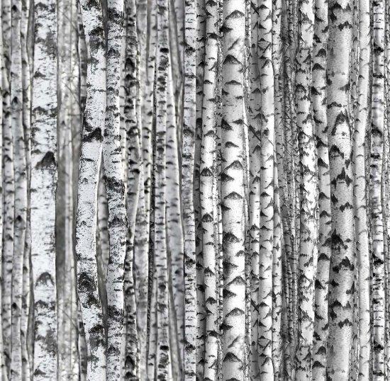 standing birch - gray
