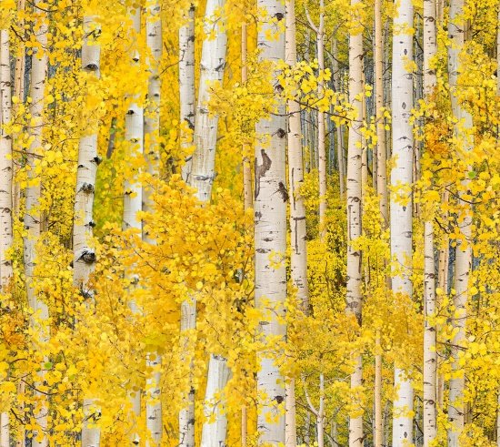 golden leaves on trees