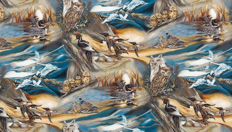 North American Wildlife - birds in settings