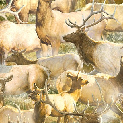 Breaking Light -  herd of elk