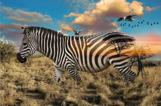 Zebra Panel from Call of the Wild by Hoffman