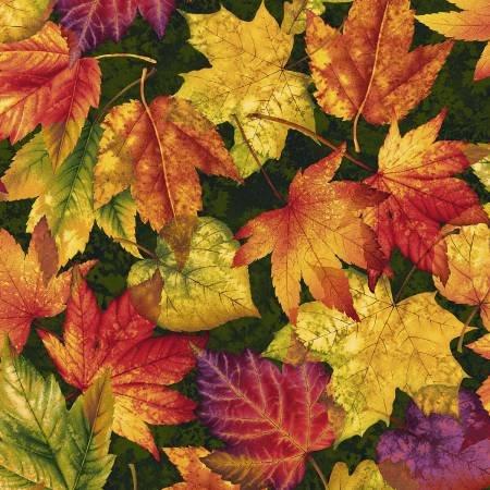 Autumn Album Forest Leaves