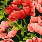 Poppy Poetry