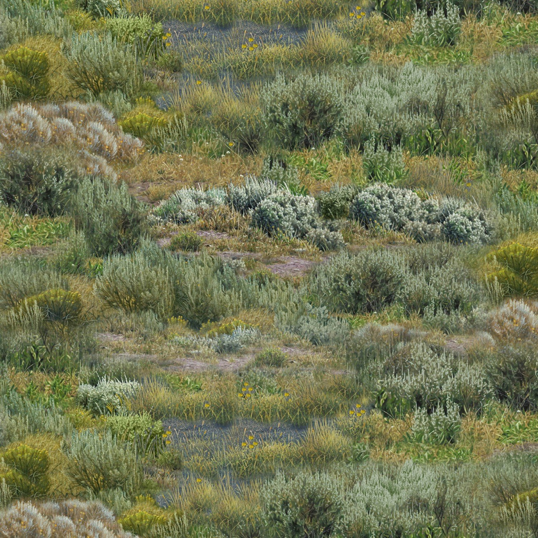 Where Buffaloes Roam grassland