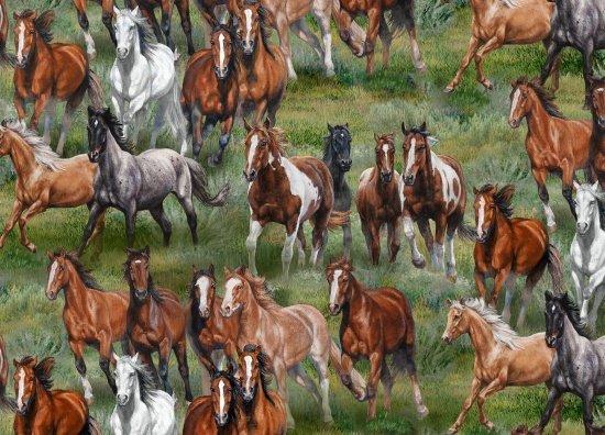Wild & Free horses running print