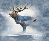 Call of The Wild  P4397-483-Fog (Elk)