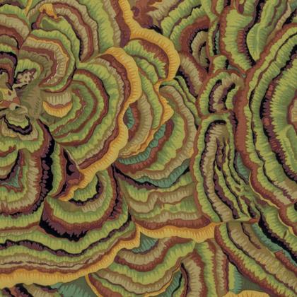 Fall 2016Tree Fungi (PWPJ082) Moss