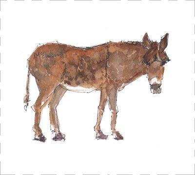 Donkey PastBos (AN005)