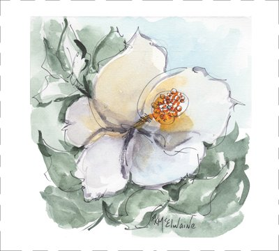 Magnolia (FL124)