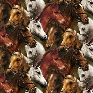 *World of Horses
