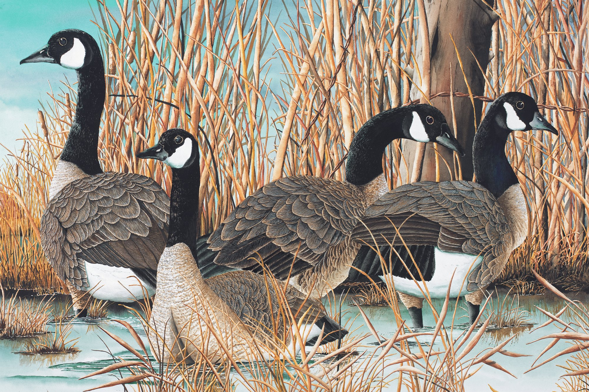 Naturescapes Canadian Goose  DP21824-42