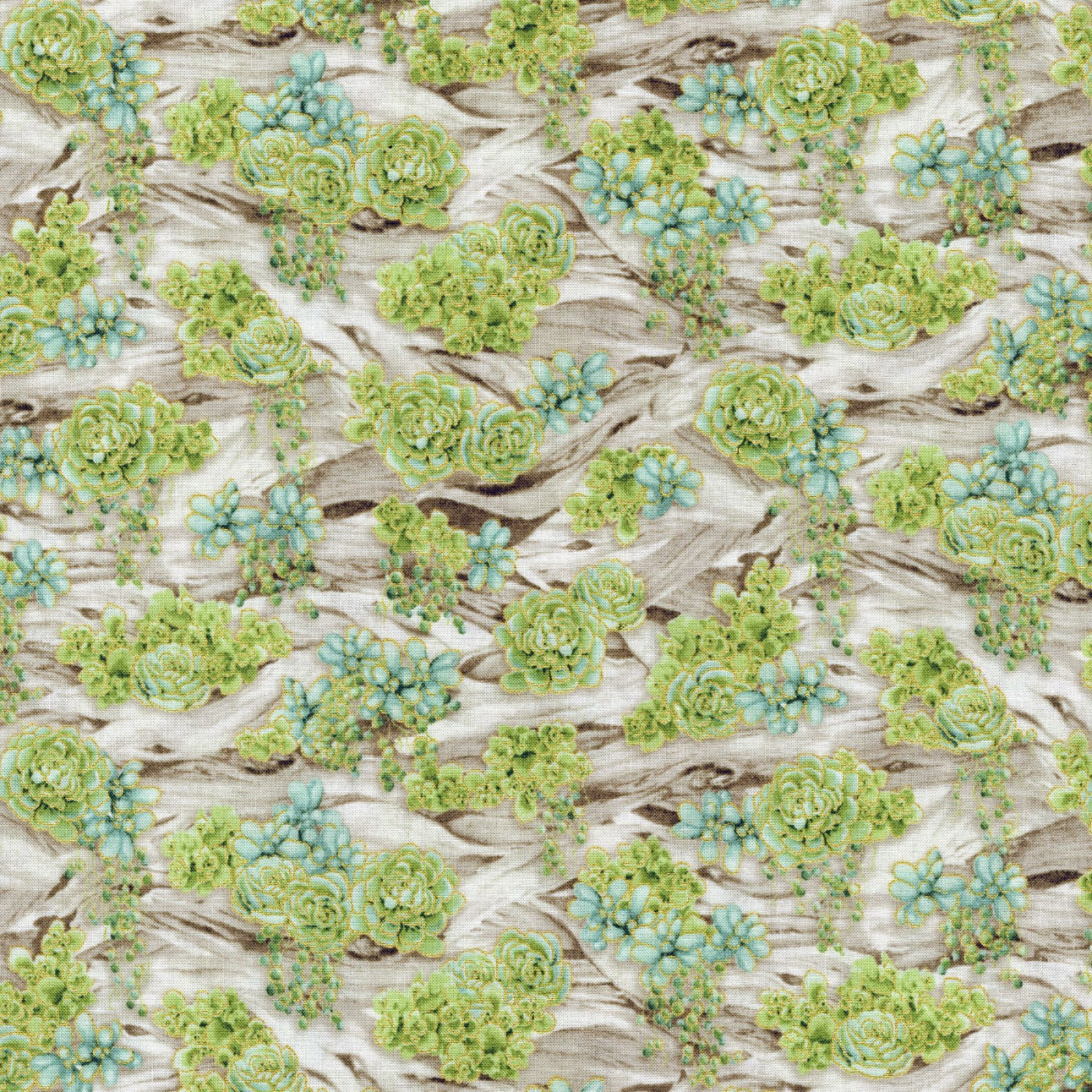 Oasis - Driftwood Garden - Aloe