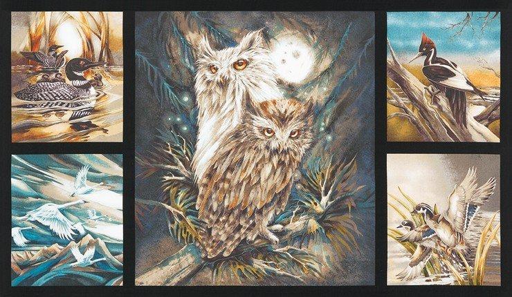 North American Wildlife - Jody Bergsma
