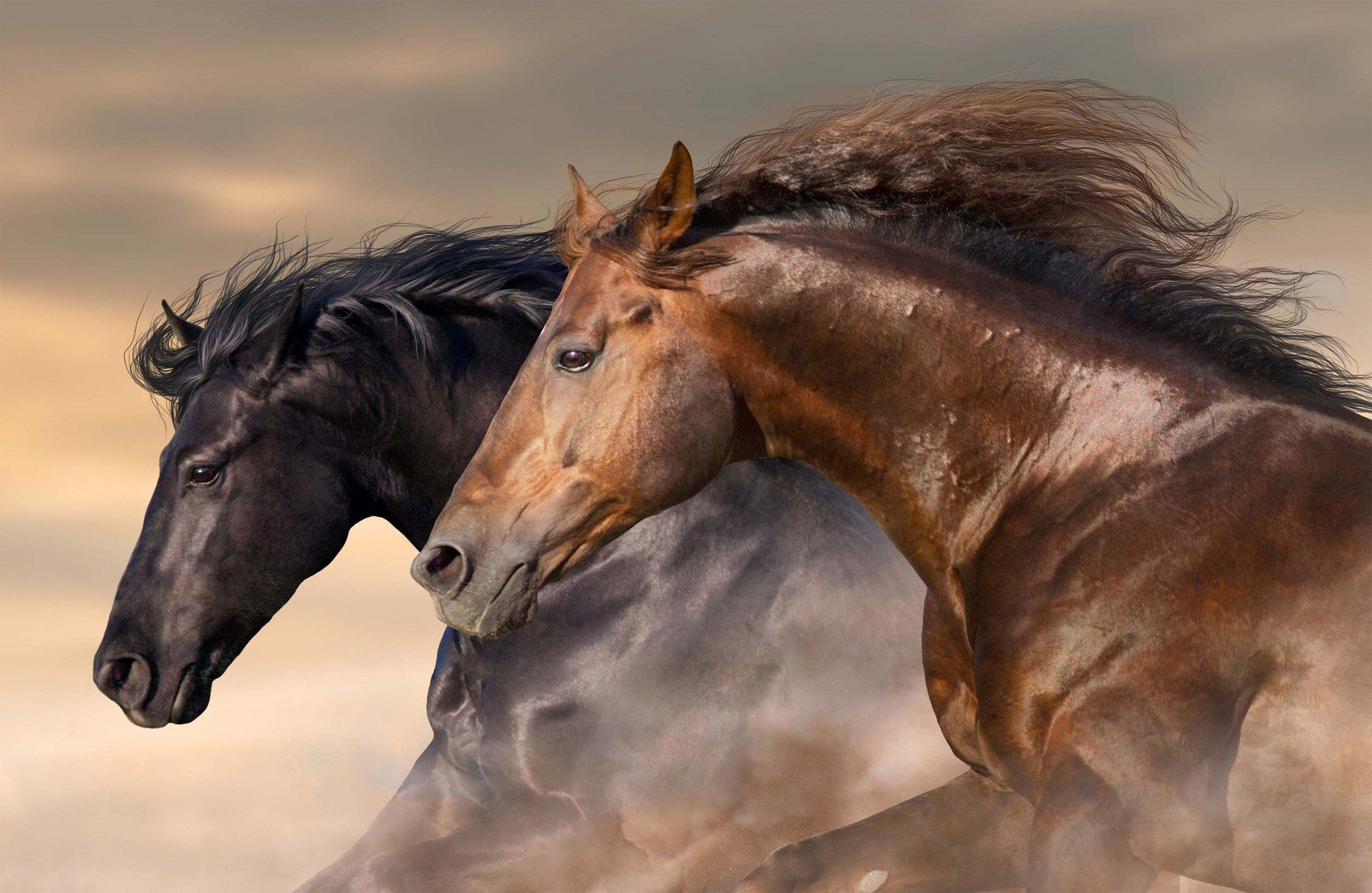 Maverick Closeup Mustang Digital Panel (28x43) #101