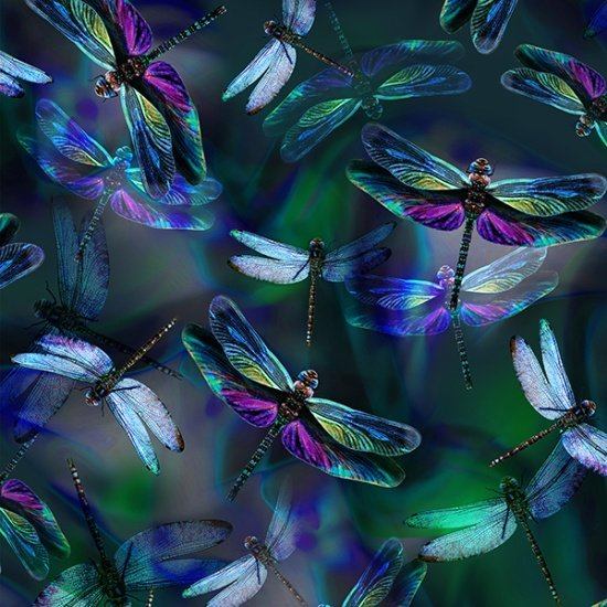 Dragonfly Dream