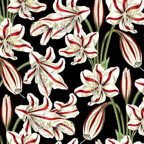 Yuletide Botanica-Amaryllis-Black