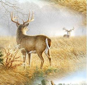 Deer Scene Multi
