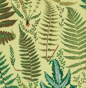 Free Spirit - Ferns in Yellow